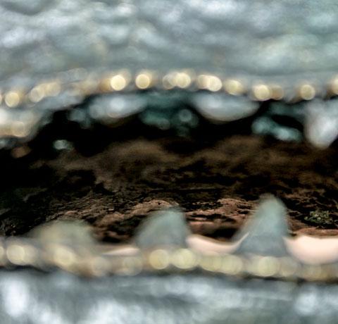 Leonora Carrington, Obra, cocodrilo, acervos, Arte Hoy, Galería