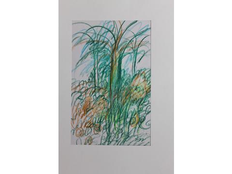 Roger von Gunten, Obra, Palmeras, Arte Hoy, Galería
