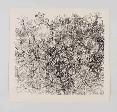 Yuko Sasai, Obra,Feijoa I , Arte Hoy, Galería