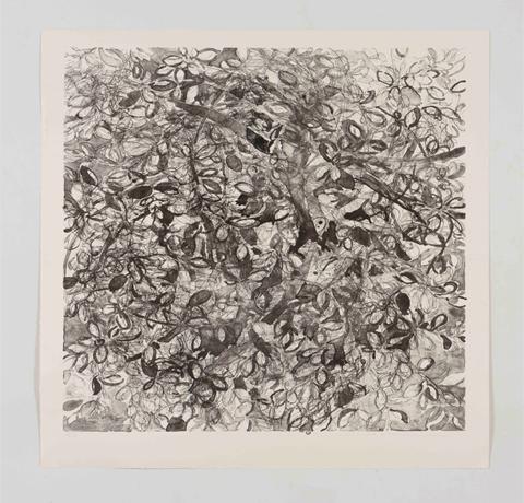Yuko Sasai, Obra, Feijoa II, Arte Hoy, Galería